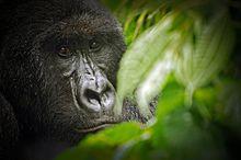 Les Ecogarde dans le Parc National de Virunga tués par les groupes armés locaux